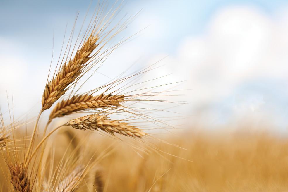 Il grano barilla passa da ravenna in treno porto di ravenna for Da dove proviene il grano della barilla